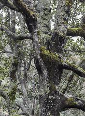IMG_0379 (álvaro argüelles) Tags: naturaleza beauty natural nature forest moss