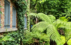 zomer in de Leuvense Kruidtuin (Kristel Van Loock) Tags: zomer2017 kruidtuin kruidtuinleuven leuvensekruidtuin zomerindekruidtuin juli2017 louvain lovanio lovaina loveleuven drieduizend 3000 botanicalgarden botanischetuin botanischergarten jardinbotaniquedelouvain jardinbotanique jardimbotanico hortusbotanicuslovaniensis visitleuven seemyleuven atleuven toerismeleuven toerismevlaanderen toerismevlaamsbrabant vlaanderen vlaamsbrabant brabantflamand brabantefiammingo fiandre flanders flandre leveninleuven zomer summer giardinobotanico ortobotanico europe europa iloveleuven leuvencity 8july2017 flemishbrabant visitflemishbrabant visitflanders visitbelgium belgium belgique belgien belgië belgica belgio varens
