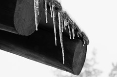 Icicles (rschnaible) Tags: yellowstone national park us usa west western wyoming sightseeing outdoors tour tourist ice icicles cold frozen bw black white photography monotone