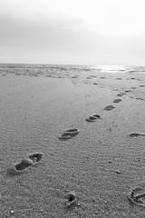 Petite baignade ? (thierry.T) Tags: mer sea plage beach pas traces contrejour