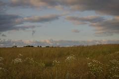 Evening sky in Hittarp (frankmh) Tags: landscape field sky evening hittarp helsingborg skåne sweden outdoor