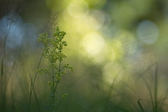 Plants and Light (Stefan Zwi.) Tags: plants light pflanzen licht bokeh macro makro ngc