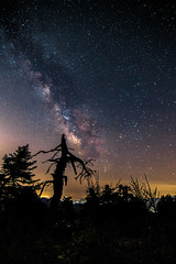 Tree stories (Vagelis Pikoulas) Tags: tree sky night nightscape view milky milkyway way landscape greece summer stars galaxy universe space 2017 july canon 6d tokina 1628mm