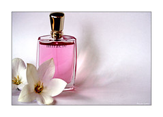 Miracle (paulinecurrey) Tags: flowers flora perfume stilllife contrast pink white shadows