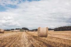 Summer landscape (mripp) Tags: art kunst outside landscape agriculture landschaft bavaria bayern feld germany deutschland sky himmel retro vintage old sony rx1rii