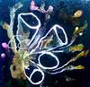 'Tube Sponge' (echt.nz) Tags: fundraiser tube sponge tubesponge ocean oceandepths mixedmedia white anemones coral underwaterworld underwater deepsea sea