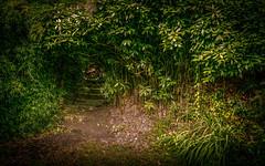 The Secret Garden (David Haughton) Tags: secret garden fineart intimate quiet peaceful green davidhaughton
