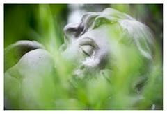 Let sleeping angels lie (leo.roos) Tags: angel engel sculpture beeld foregroundbokeh a7s helios81532automat гелиос81253автомат refitfordigital mountswap m42 kiev10 kiev15 arsenal russianlenses sovietglass darosa leoroos