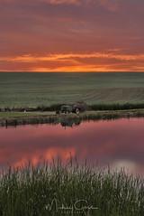 Viibrant Sunset On The Palouse (NikonDigifan) Tags: sunset palouse palousehills pond reflection vibrant tractor agriculture farming idaho niksoftware nikond750 nikon28300 colorefexpro mikegassphotography