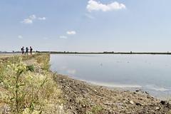 IMG_1238 (kevindalb) Tags: 2017 italia italy italie piemonte vercelli santhia via francigena viafrancigena risaie rice fields champs riz acqua water eau