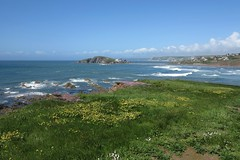 bantham38 (West Country Views) Tags: bantham sand devon scenery