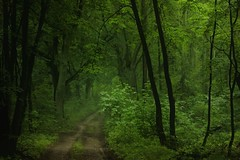 (nettisrb) Tags: wald weg forrest wood landschaft path
