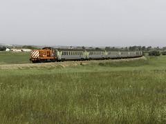 LD 1415 | 20861 | Beja (Fábio-Pires) Tags: 1400 cp1400 1415 cp1415 locomotiva locomotive diesel tracçãodiesel cp cplongocurso passageiros passenger comboiodocantealentejano cantealentejano especial special carruagens cars corails cpcorails beja linhadoalentejo portugal terminalintermodal 20861 comboio train ferrovia englishelectric