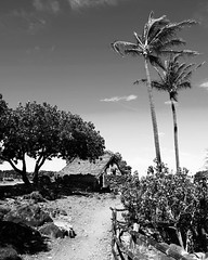 lapakahi7 (christibarrow) Tags: black white fishing shack water ocean ancient old trees path fence cbarrow hawaii lapakahi state park