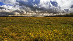 a sea of yellow .... (HHH Honey) Tags: sonya7rii tokina2035mmlens tokina salisburyplain wiltshire summer clouds cloudscape landscape yellow wildflowers umbelliferae googlenikcollection colorefex