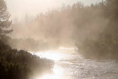 Morning mist (bea-9) Tags: morningmist scenery landscape trees nature river ontario morning rainysummer rain poetry verse ode poem