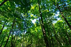 Forest (wackybadger) Tags: cudahywoodssna nikon tree forest wisconsin milwaukeecounty nikond7000 sigma1020mmf4exdchsm sna351 wisconsinstatenaturalarea