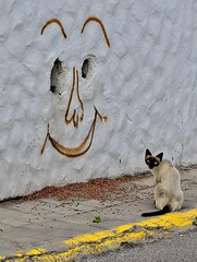Please Feed Me (tcees) Tags: street tarajalejo fuerteventura streetphotography urban canaryislands canaries pavement sidewalk catfood wall face paint cat siamese siamesecat stray calleisidrodíaz graffiti nikon d5200 1855mm hole