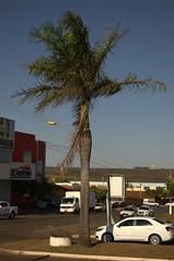 Jataí, Goiás, Brasil (Proflázaro) Tags: brasil goiás cidade praça praçadacatedral palmeira cerrado jardim natureza ecologia paisagemurbana