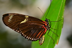 D71_6035 (joezhou2003) Tags: butterfly wild life insect nature tamron 90mm f28 vc 004 nikon d7100 macro photography