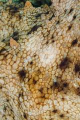 Texture (peau de poulpe) (YackNonch) Tags: mugel nauticamna7d plongéesousmarine nauticam ssysd1 scubadiving ss plongéedubord octopus canon scuba poulpe texture plongeur provence plongée eos diving calanque na7d calanquedumugel macro france canoneos7d laciotat dive lieu 7d diver