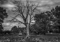 "I need some Leaves, it's cold in winter. (Ian Emerson ""I'm Back"") Tags: tree skeleton dead branches trunk blackwhite park house countryside outdoor"