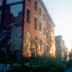 (patrickjoust) Tags: tlr twin lens reflex 120 6x6 medium format expired discontinued film c41 color negative manual focus analog mechanical dirty patrick joust patrickjoust west baltimore sowebo maryland md usa us united states north america estados unidos urban street city row house home sidewalk flowers brick sunset dusk