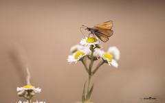 DSC_3169-2 (Franck.H Photography) Tags: macro insectes araignée coccinelle