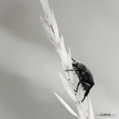 DSC_3124-2 (Franck.H Photography) Tags: macro insectes araignée coccinelle
