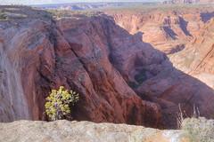 Wrather Arch overlook (Chief Bwana) Tags: az arizona arch wratherarch vermilioncliffs pariaplateau navajosandstone overlook pariacanyon psa104 chiefbwana 500views