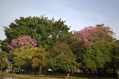 Jataí, Goiás, Brasil (Proflázaro) Tags: brasil goiás jataí parqueecológicodiacuy parque bosque flores natureza ecologia árvore cidade cerrado