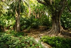 Deep in the jungle (Csaba Varju) Tags: botanic garden jardin botanico malaga nature wood trees forest jungle spain spanish d5100 nikon