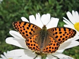 Butterfly 1378