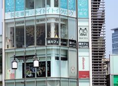 Cat Cafe Close-up (L e n o r a) Tags: tokyo japan harajuku shibuya