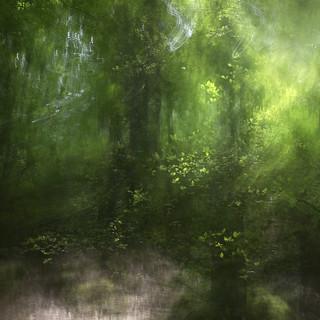 Woodland filter