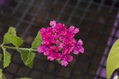 Summer_Garden_Club_July_2017_010 (hcprecinct4) Tags: garden flowers gardening botanic mercer gardens gingers water lilies