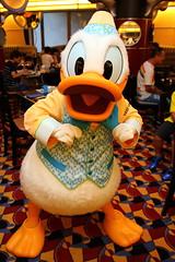 Donald Duck (sidonald) Tags: tokyo disney tokyodisneyresort tdr disneyambassadorhotel chefmickey シェフ・ミッキー ディズニーアンバサダーホテル greeting グリーティング ドナルド donald
