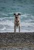 DSC_3773 (nonsolopentax) Tags: cane animale mare maredinverno