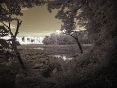 IR: Government Island 2 (dzmears) Tags: ir infrared trees water island forest pads swamp creek clouds