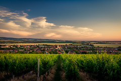 Lines of vineyards (Pavel Cervenka Photographer) Tags: vineyard southmoravia blatnice nature landscape evening summer village olympus em10 zuiko1240f28 pavel cervenka czech republic