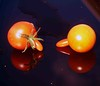 P1014837 (saxonfenken) Tags: 2771misc 2771 two damaged reflection red tomato deformed