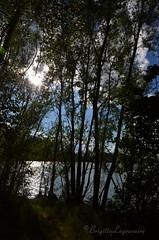 """Contre-jour (Brigitte .. . """"Tatie Clic"""") Tags: 2017071218 juillet été contrejour reflet arbre eau soleil refletsdansleau paysage ombre lumière sansretouche parcnaturelagengaronne agen lotetgaronne aquitaine francesudouest"""