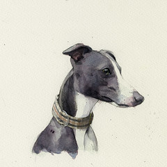 Archie the whippet (Wil Freeborn) Tags: whippet watercolour watercolor