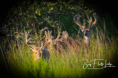 IMG_7082 (Bay Flats Lodge Seadrift, Texas) Tags: trophy whitetail deer ranch property feeders guides lodge texas seadrift bay mld parks wildlife feed protein