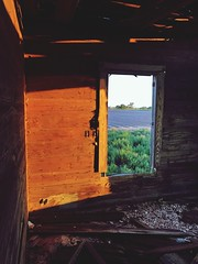 """""""Once Upon a Time"""" An abandoned old home sits in decay once proudly hosting a lifetime beside the cotton fields of West Texas. Window Architecture Built Structure Abandoned Abandoned Buildings Abandoned & Derelict Rural Scene West Texas Sadness Window Vie (bradhodges09) Tags: window architecture builtstructure abandoned abandonedbuildings abandonedderelict ruralscene westtexas sadness windowview brokendreams cottonfields"""