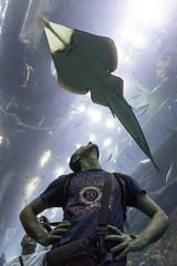 Is he watching me? (tesKing (Italy)) Tags: abudhabi aquarium cristian dubai dubaimall emiratiarabi io uae emiratiarabiuniti ae