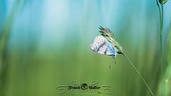 DSC_2861 (Franck.H Photography) Tags: macro insectes araignée coccinelle