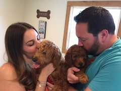 Ruby Red's Ditto with her new family on Puppy Pick day!
