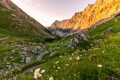 Karwendel Sunrise (johannesotte84) Tags: alps light otte wandern hiking austria österreich karwendel lamsenjoch lamsen joch hütte gipfel gold morgen früh blume wiese frei urlaub trekking hüttentour