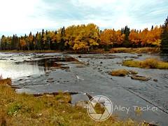 (AlleyTucker) Tags: fall autumn beautiful northernpeninsula newfoundland canada